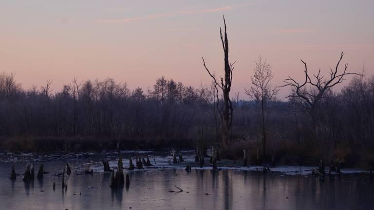 De Peel op de grens van Brabant en Limburg lijdt al jaren onder een overdosis stikstof (foto: Alice van der Plas).