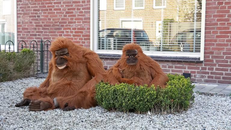 'Apen'  in Oosterhout.