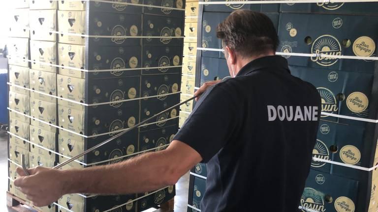 Douanier ruikend aan prikstok tussen bananendozen in Antwerpen.