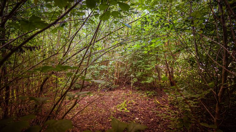 Een tiny forest (foto: IVN).