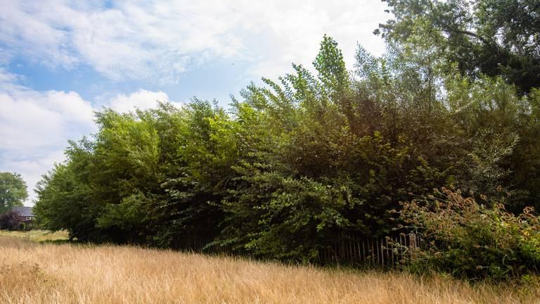 Een tiny forest in de zomer (foto: IVN).