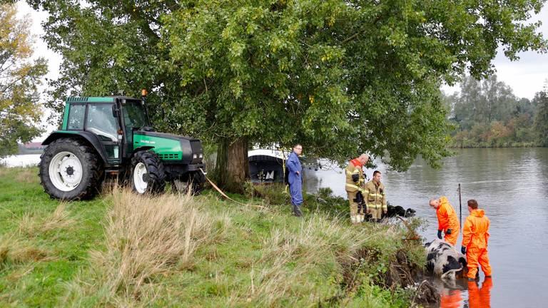 Omstanders en hulpdiensten probeerden de koe te helpen (foto: Saskia Kusters).