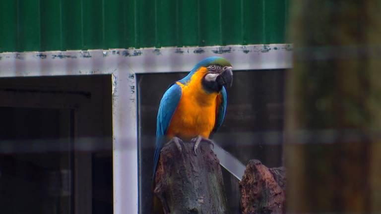 Een van de papegaaien van ZOO Veldhoven.