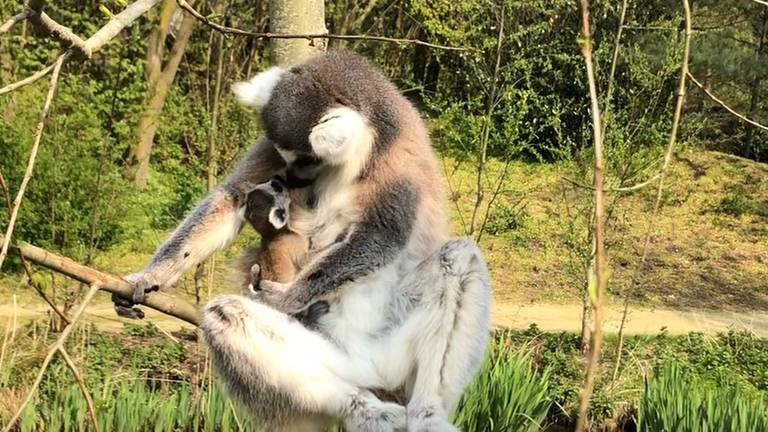 Foto's: ZooParc Overloon.