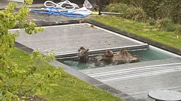 Kameel in het zwembad (foto: Bas Nijboer).