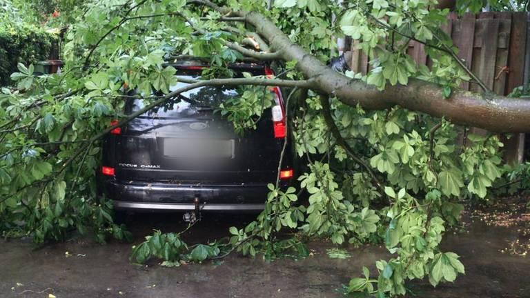 Boom op een auto aan de Oude grintweg in Oirschot.