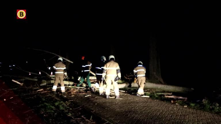 Vanuit heel de provincie komen donderdagochtend  meldingen binnen van omgewaaide bomen.