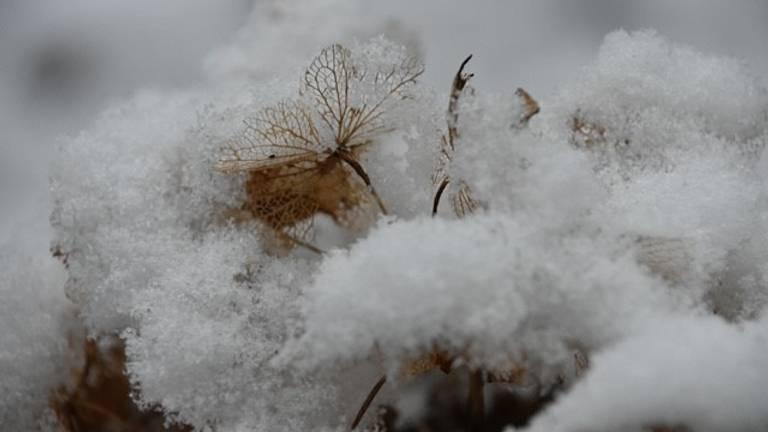 Sneeuw in Bavel (foto: Anne-Marie van den Akkerveken).