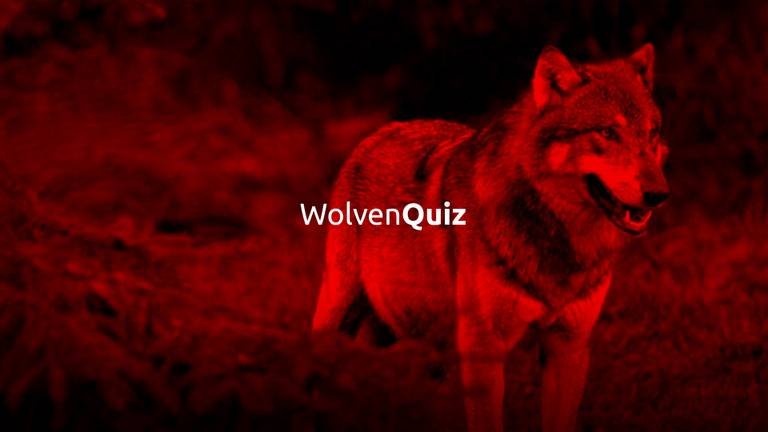 Test je kennis over de wolf.