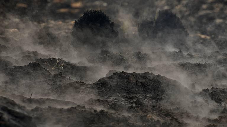 De grond in de Peel is nog gloeiend heet (foto: Alice van der Plas).