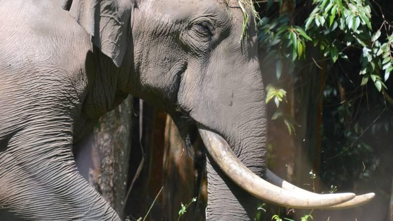 De handel in nieuw ivoor is strafbaar.