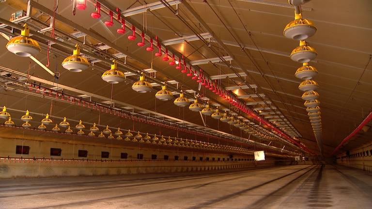 Een van de lege stallen van Ronny (foto: Omroep Brabant)