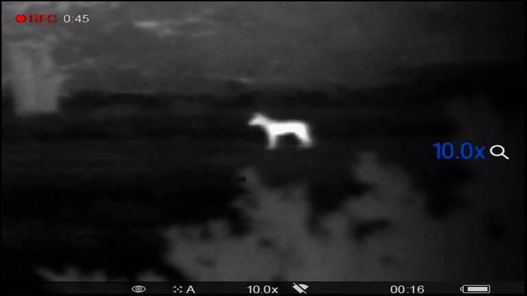 De wolf was te zien met een warmtebeeldcamera.
