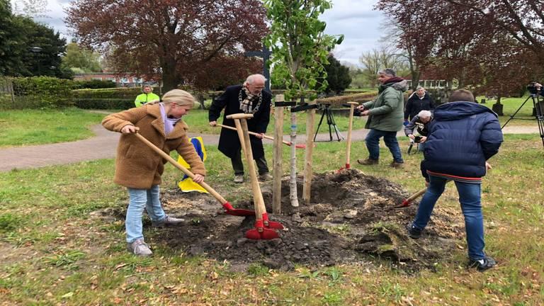 Luuk en Juka planten de Anne Frankboom.