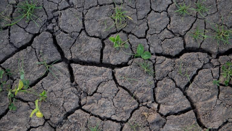 De natuur heeft dorst (foto: Ab Donker).