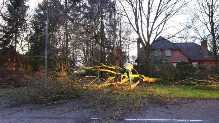 Boom over de weg aan de Dijk in Helvoirt (foto: Bart Meesters / SQ Vision).
