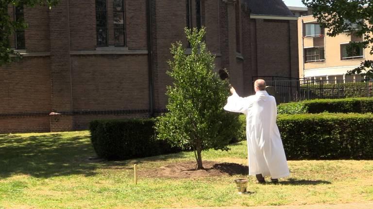 Pastoor John van de Laar zegent de Hartjesboom.