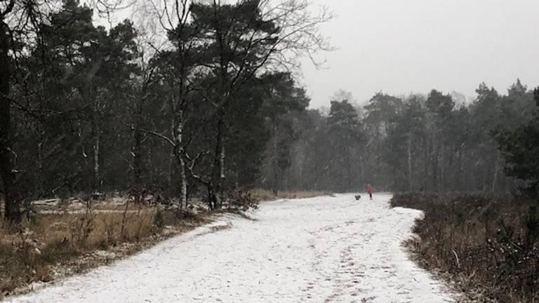 Ook de Vughtse Heide lag er idyllisch bij (foto: Miriam van de Hulsbeek).