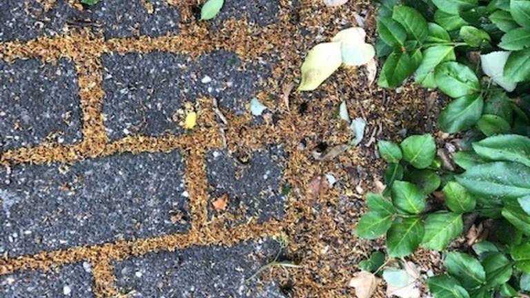 Dode hommels (foto: Mechteld van Meer).