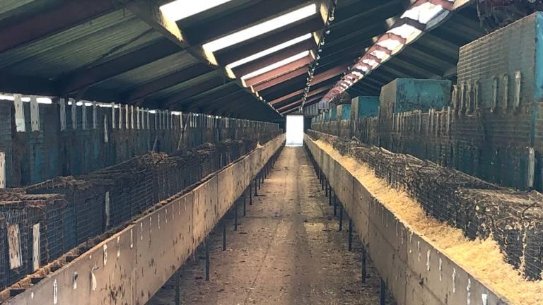 In deze stallen zaten honderen nersten (foto: Omroep Brabant).