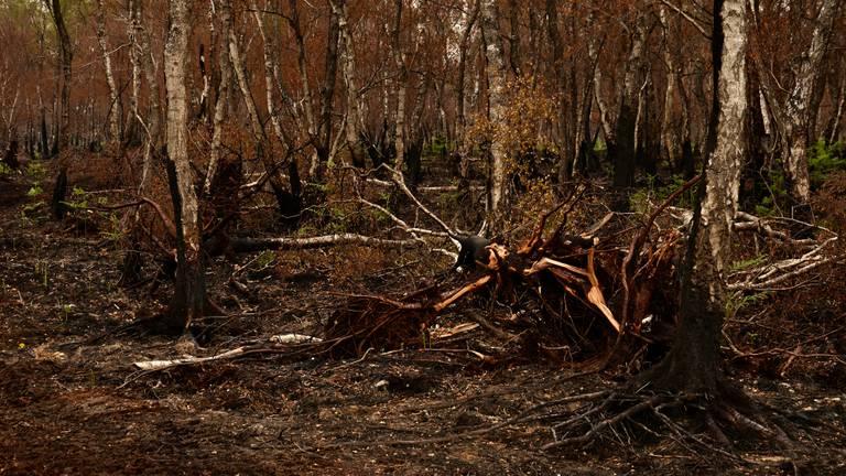 De verschroeide Peel (foto: Alice van der Plas).