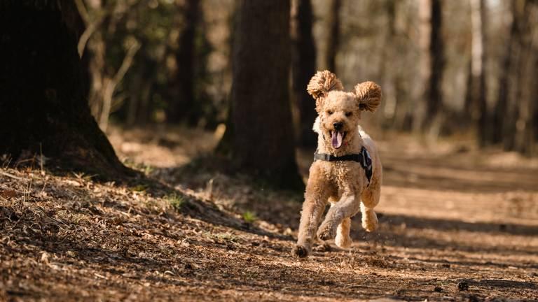 Tynke zou graag weer een keer een sprintje trekken (foto: Mindy van den Broek).