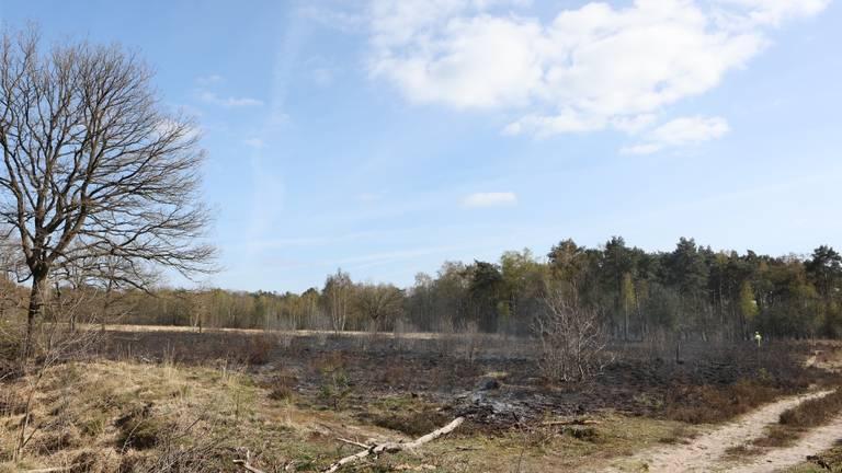 Zwartgeblakerde Vughtse Heide (foto: Bart Meester/SQ Vision)