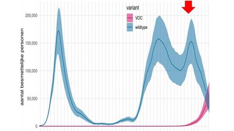 Het aantal coronabesmettelijke personen. Roze: de Britse variant. Blauw: de 'klassieke' variant (bron: RIVM)