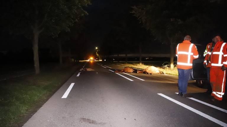De aanrijding op de N264 vond rond vijf uur dinsdagnacht plaats (foto: SK-Media).